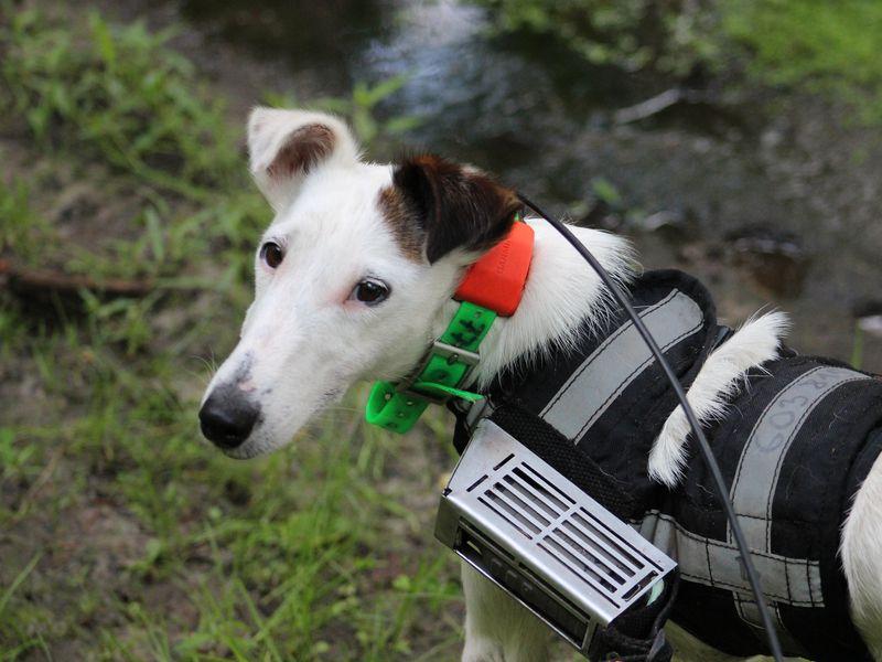 Estudios explican la capacidad de navegación canina