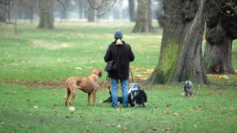 Los perros en invierno necesitan de las actividades al aire libre