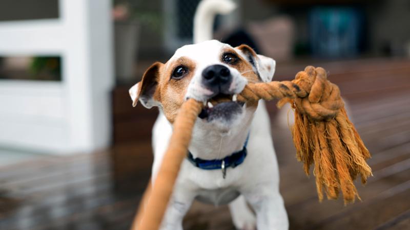 Los mejores juegos dentro de casa para perros en invierno