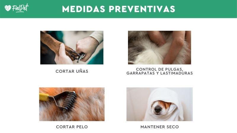 Prevenir el parche caliente en perros