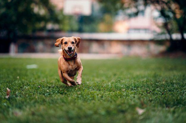 Plantas tóxicas en perros y gatos medidas de prevención